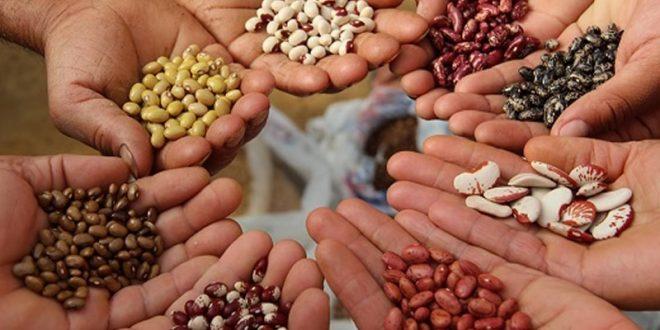 Más de 50 organizaciones se manifiestan contra el proyecto de ley que busca privatizar las semillas